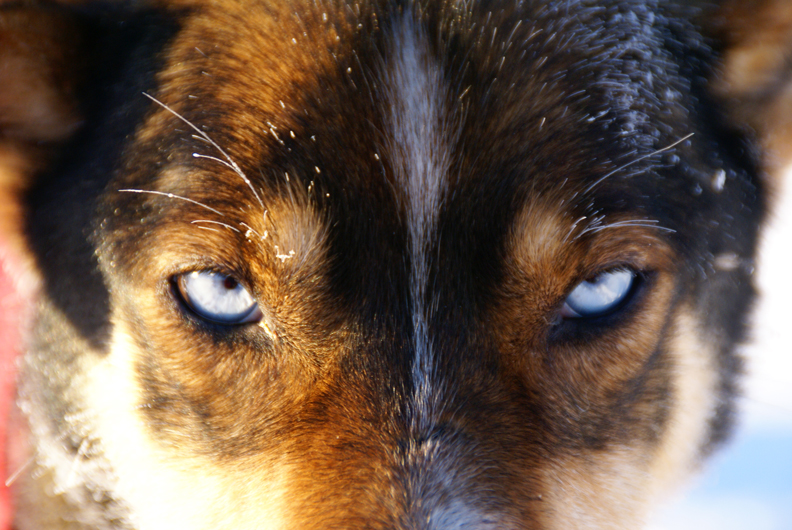 Markos Eyes